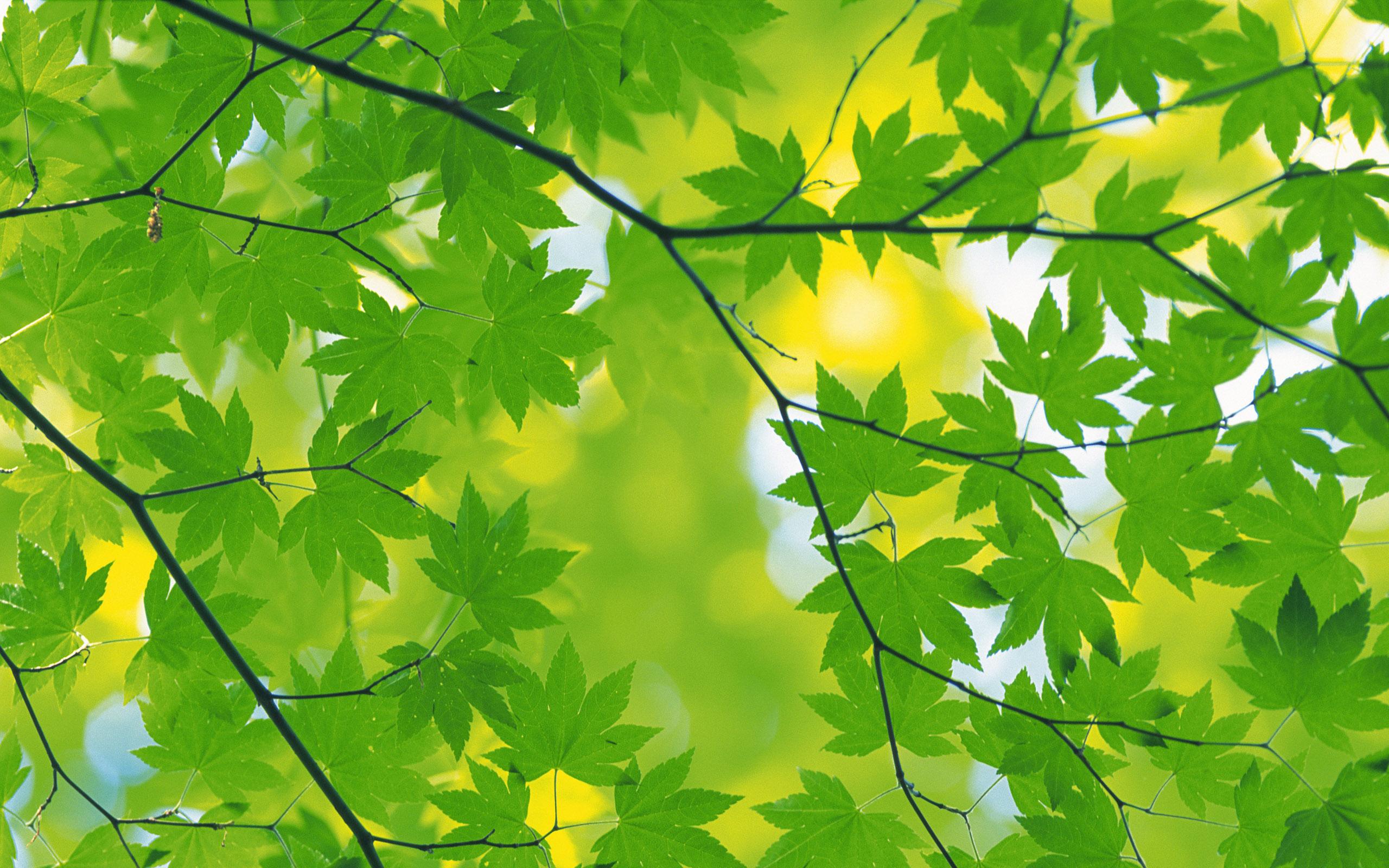 листья зелень фокус  № 1341685 без смс