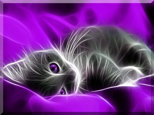 free 640X480 Fractal Kitten 640x480 wallpaper screensaver preview id 640x480