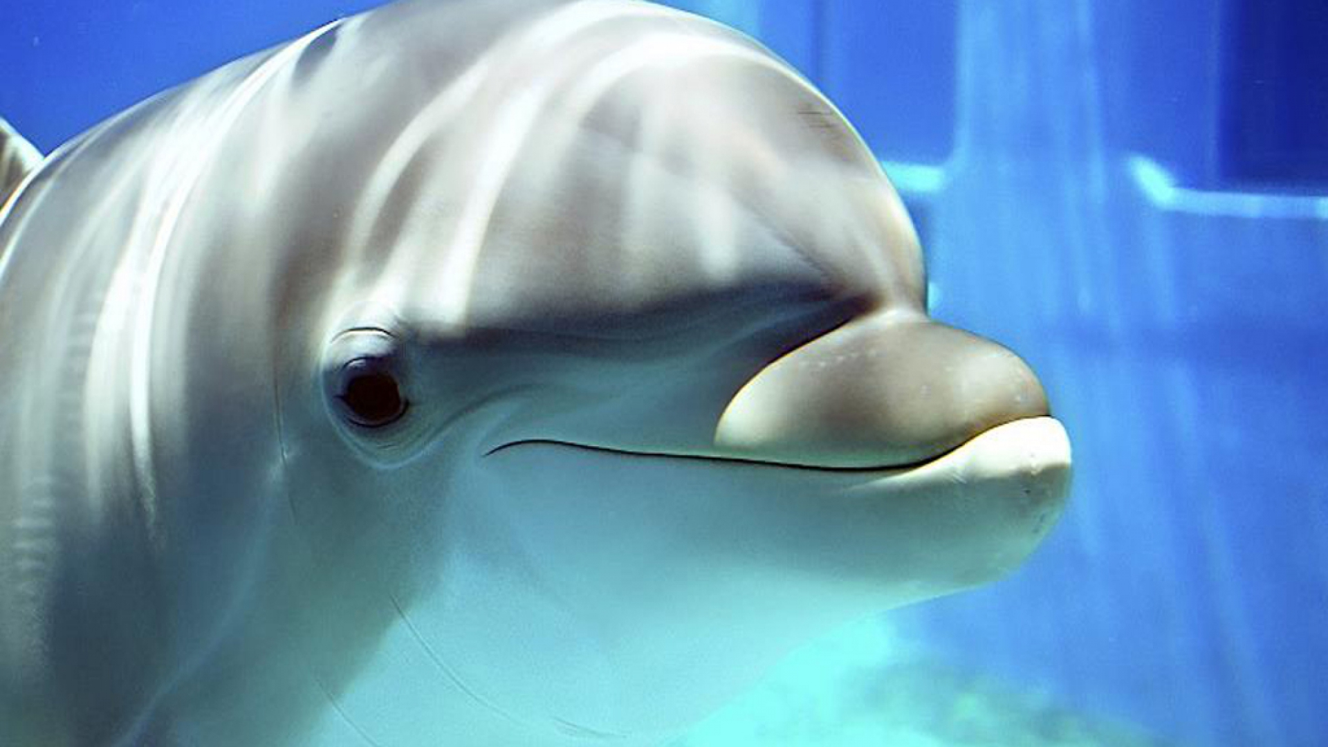Dolphin Wallpapers Best Wallpapers 1920x1080