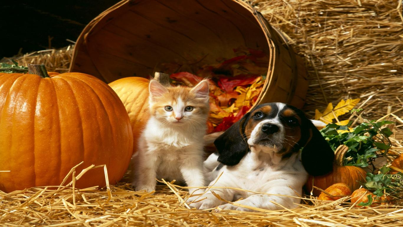 Cat And Dog Happy Thanksgiving