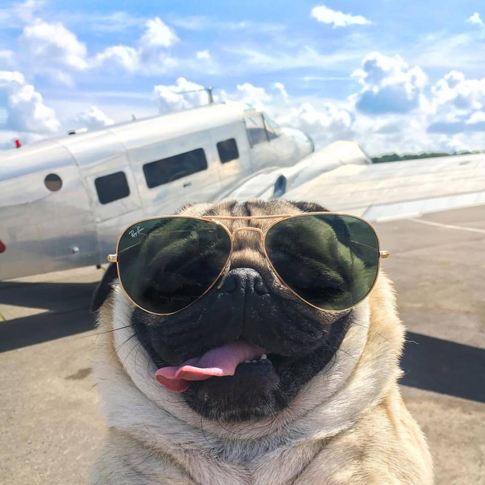 25 times Doug the Pug made us question our life choices   DogBuddy 960x960
