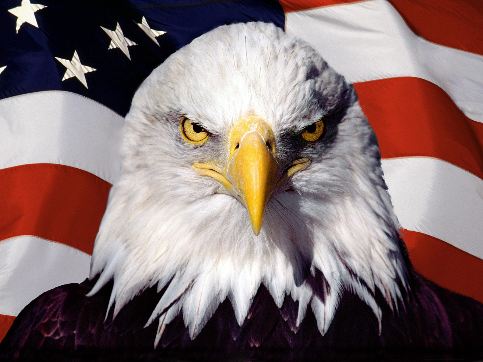 Eagle on flag wallpapers Eagle on flag stock photos 1600x1200