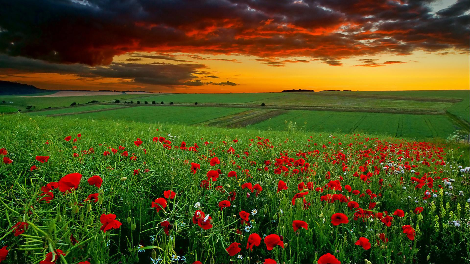 1080p Desktop in Green Landscape with Flowers HD Wallpapers for 1920x1080