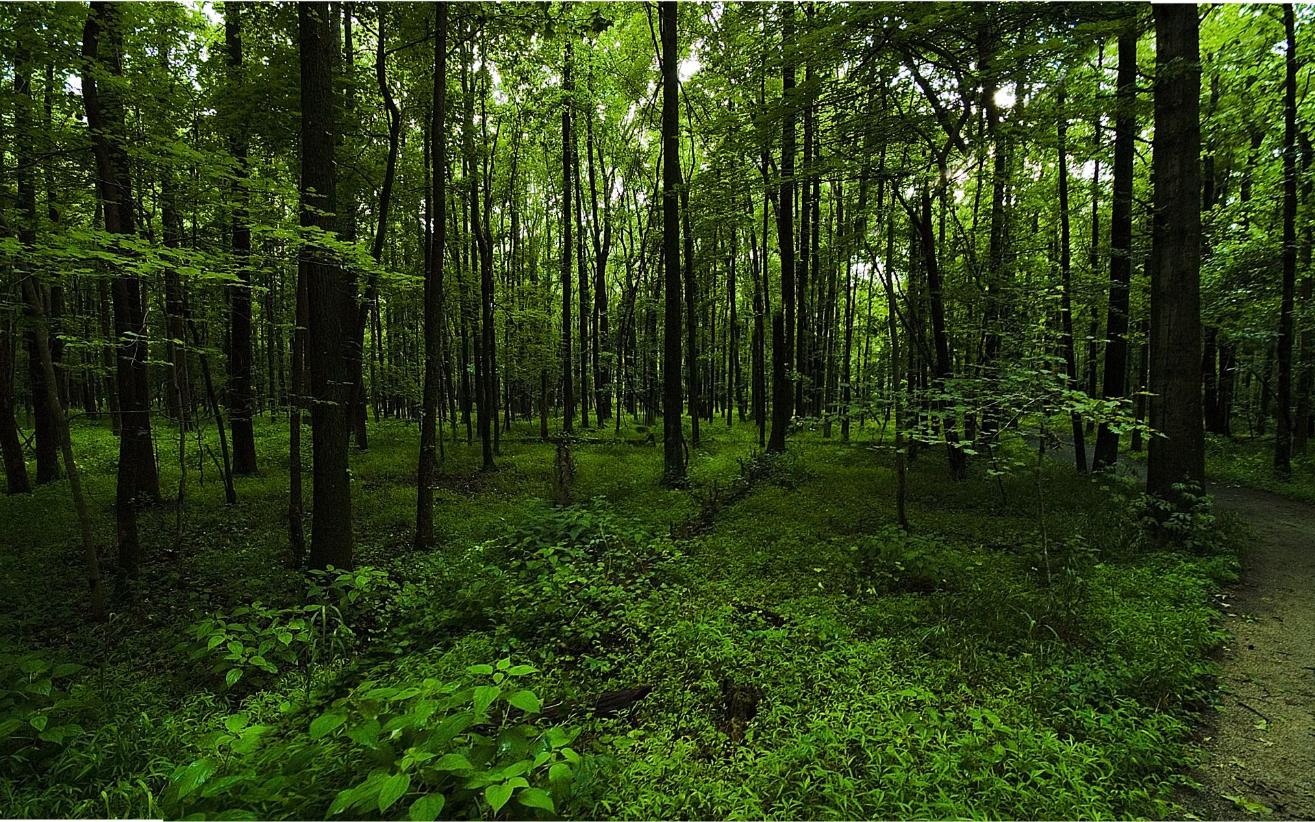 green forest wallpapers green forest hd wallpapers green forest hd 1920x1200