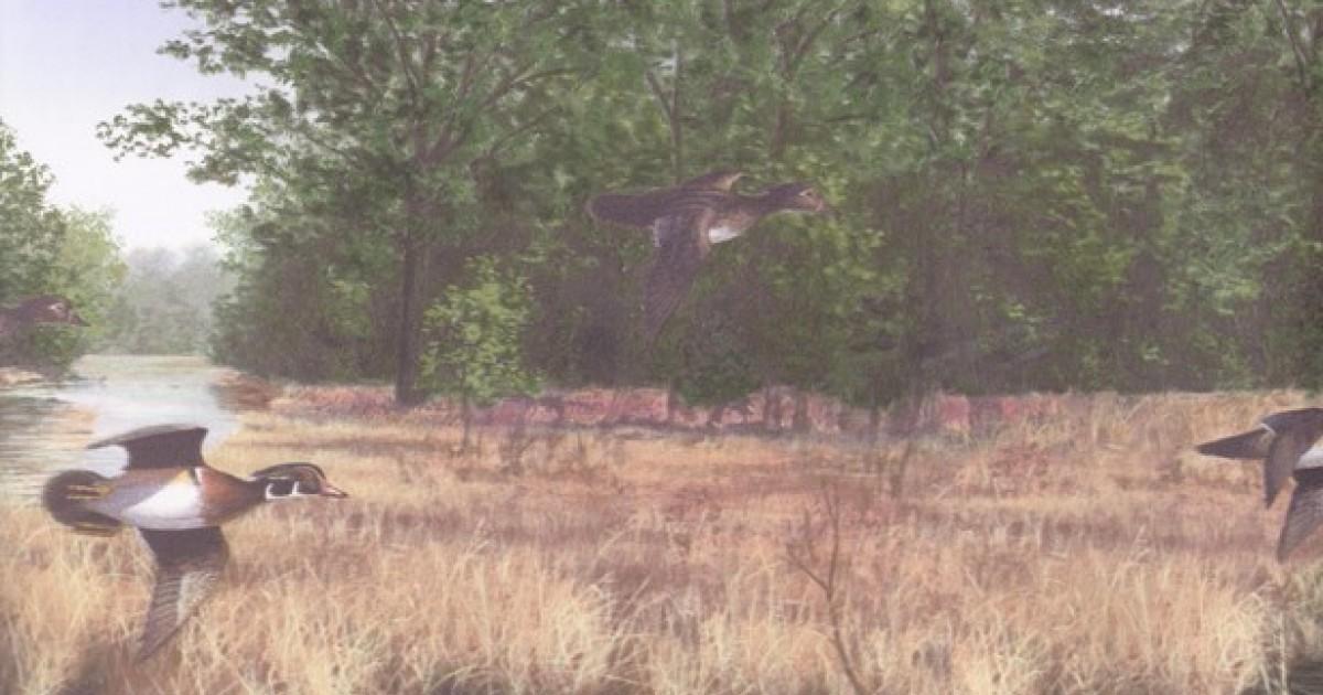 Lake Scenery Flying Ducks Wallpaper Border 1200x630
