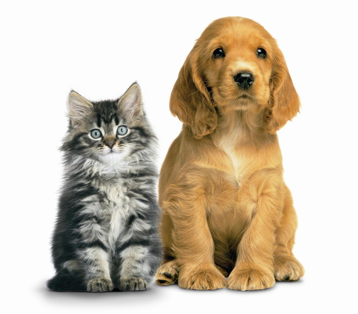 Dog And Cat Wallpaper - WallpaperSafari
