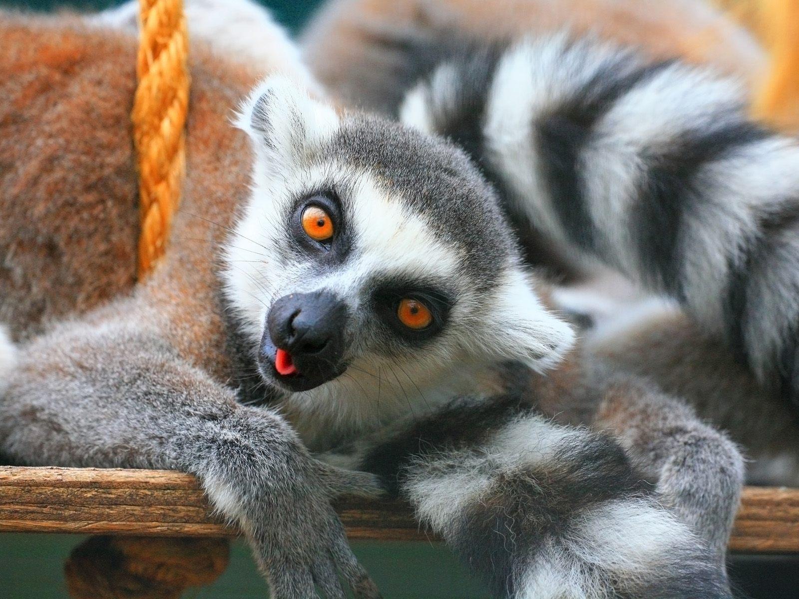 76 funny animal desktop backgrounds on wallpapersafari - Funny animal wallpapers ...