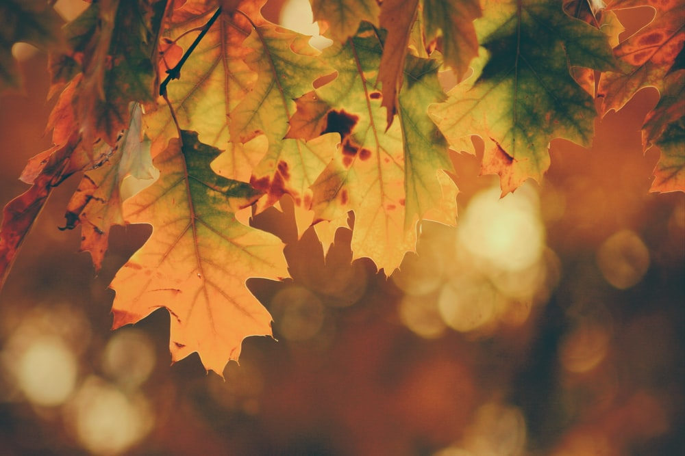 Autumn Images Download Images on Unsplash 1000x667