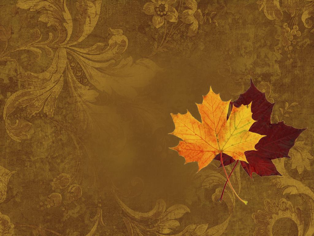 48   free harvest wallpaper on wallpapersafari