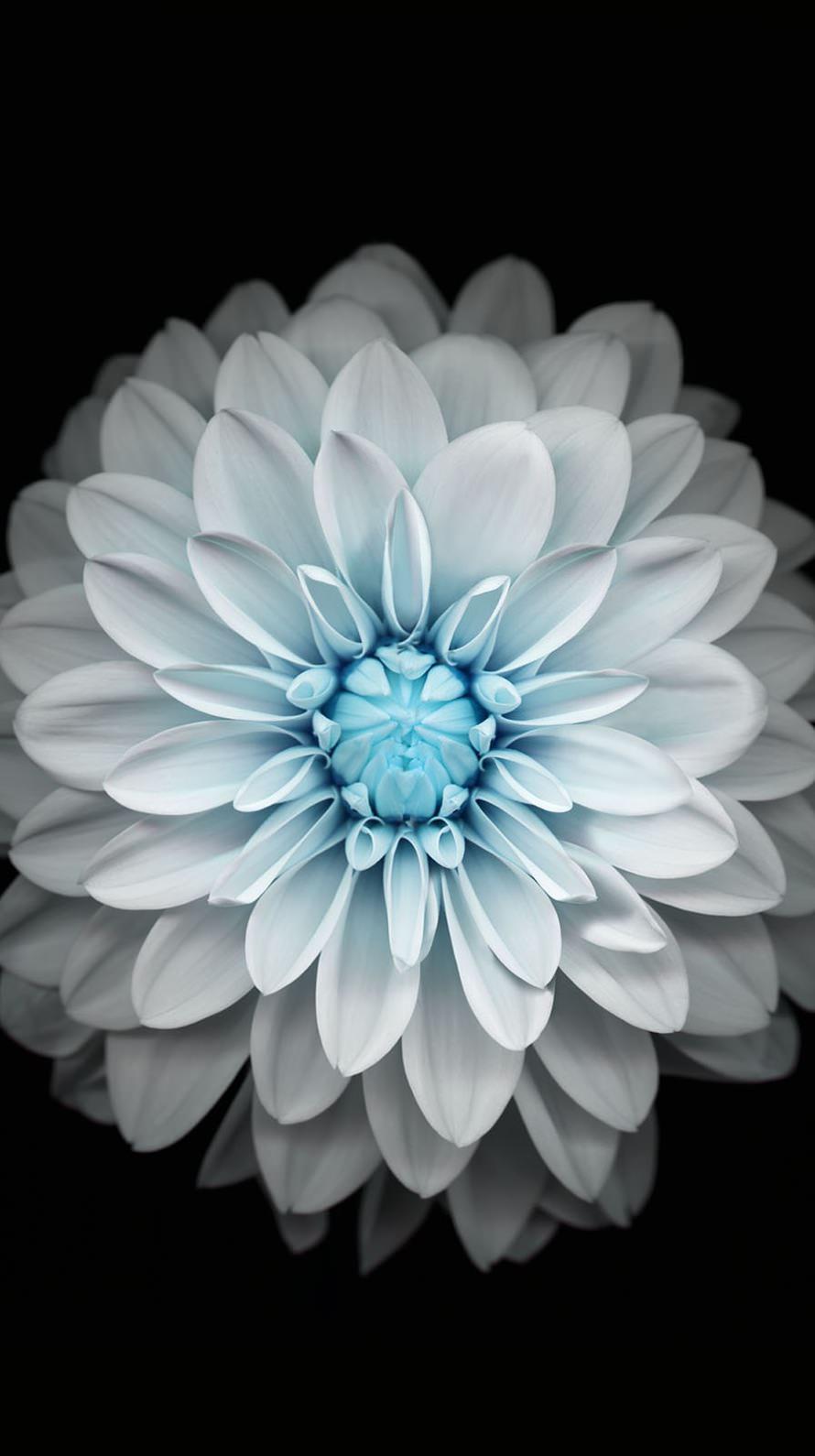 iPhone Wallpaper Flowers - WallpaperSafari