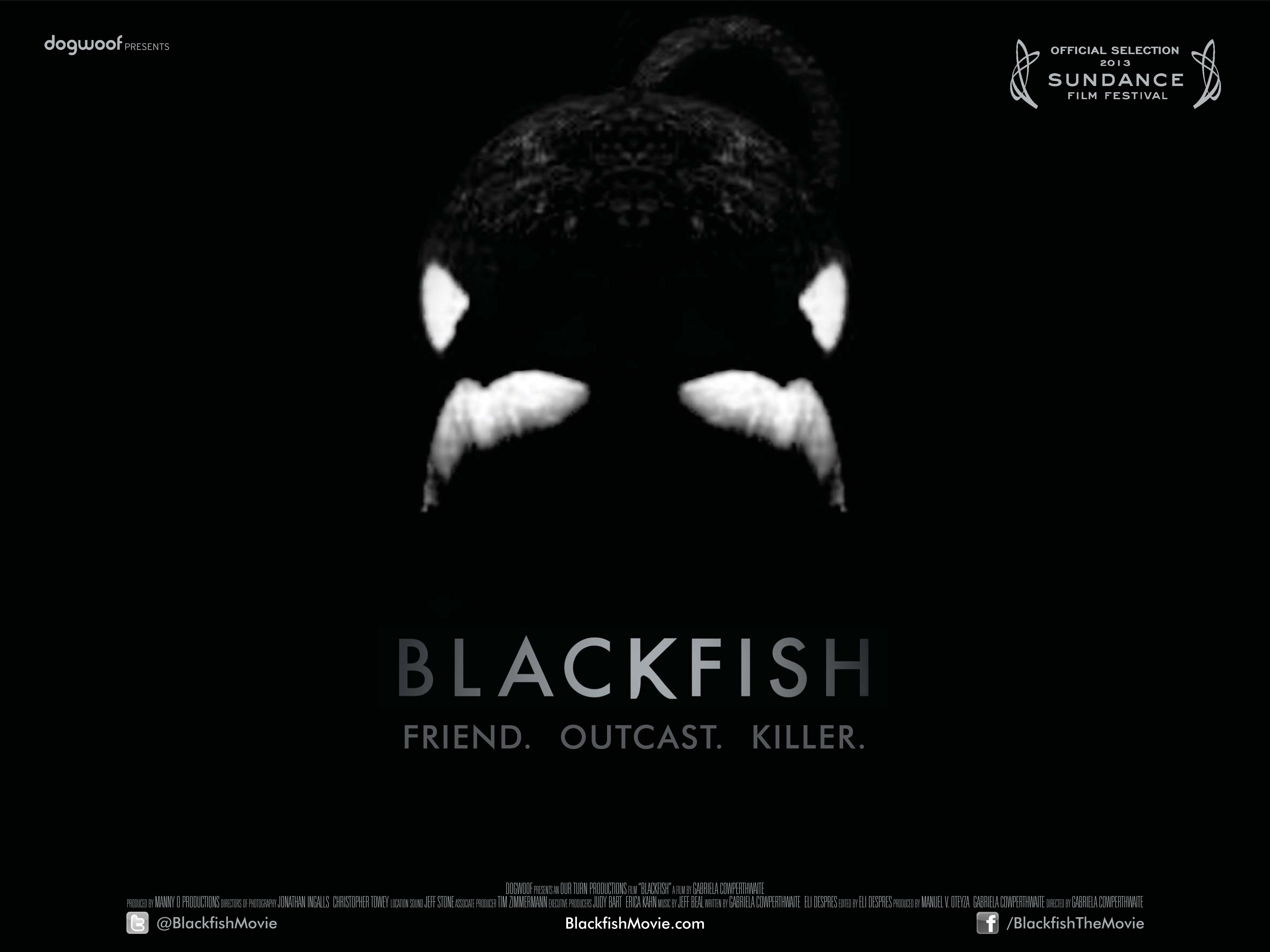 Considering Blackfish and the Question of Mammals in Captivity 4724x3542
