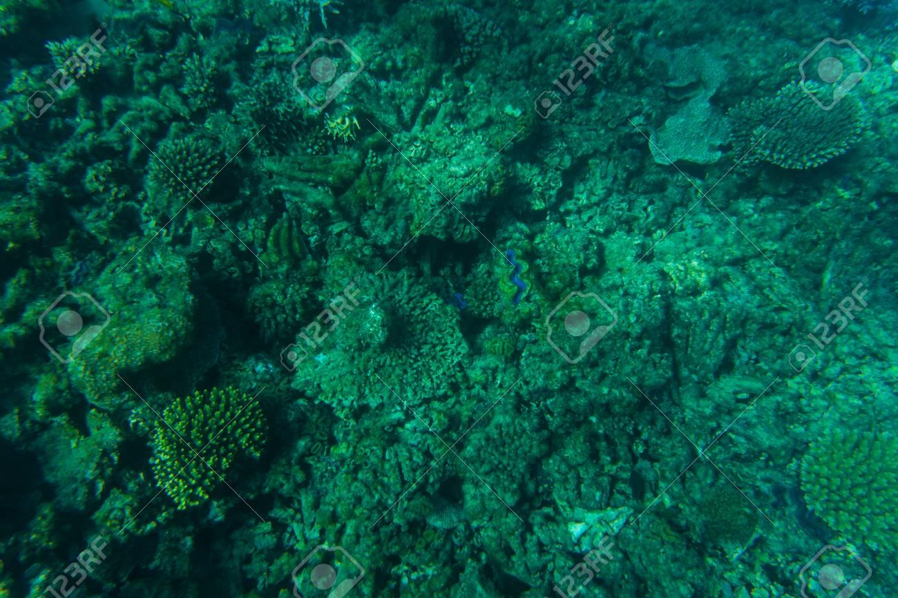 Beautiful Seabed Background Gorgeous Sea Bottom Through 1300x866