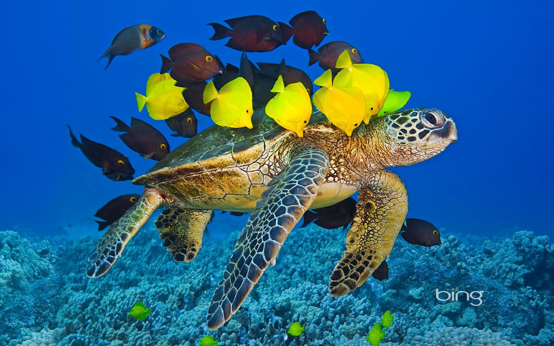 Sea turtle with the fishes wallpapers and images   wallpapers 1920x1200