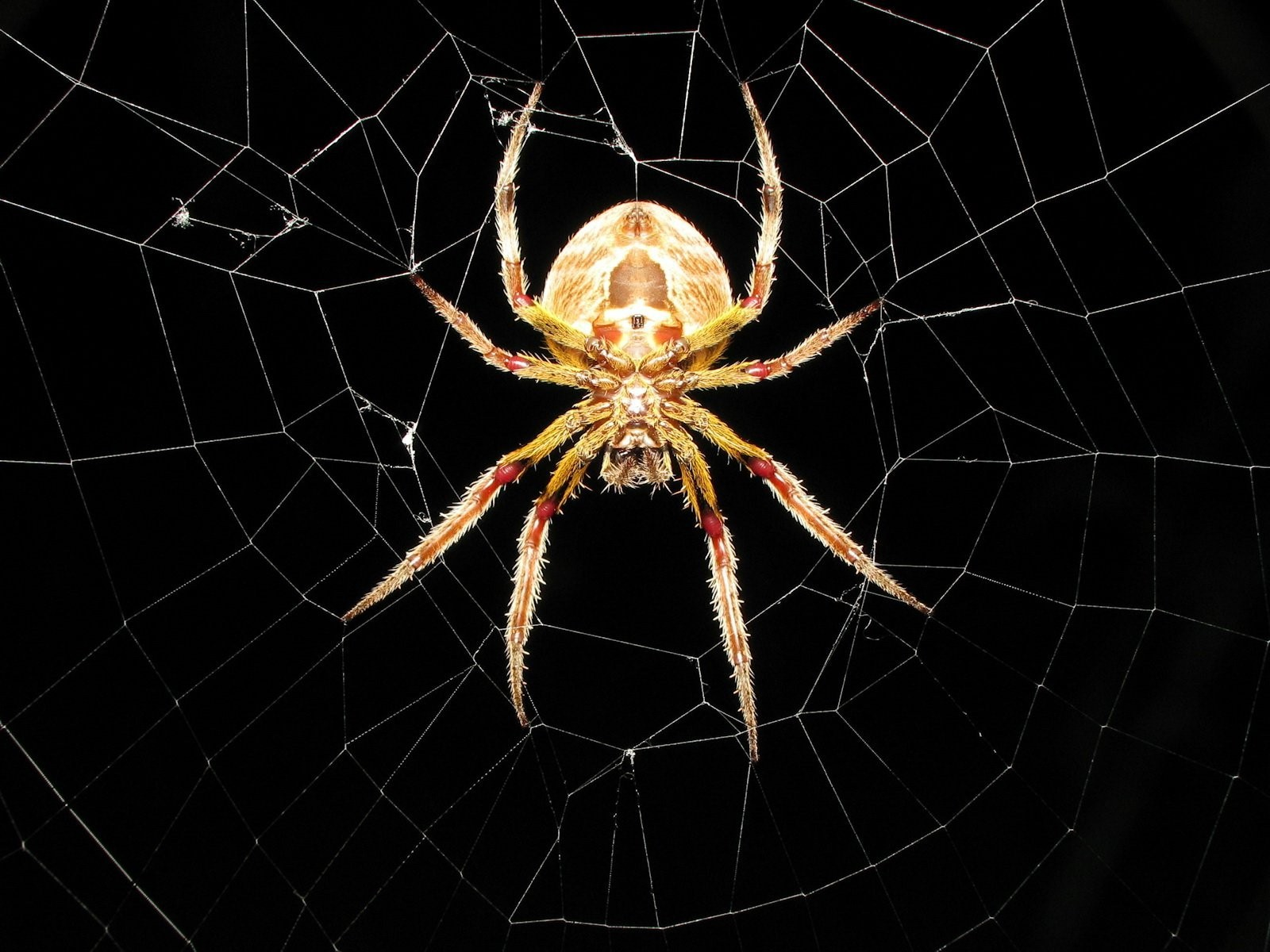 Spider om Web HD Wallpapers 1600x1200