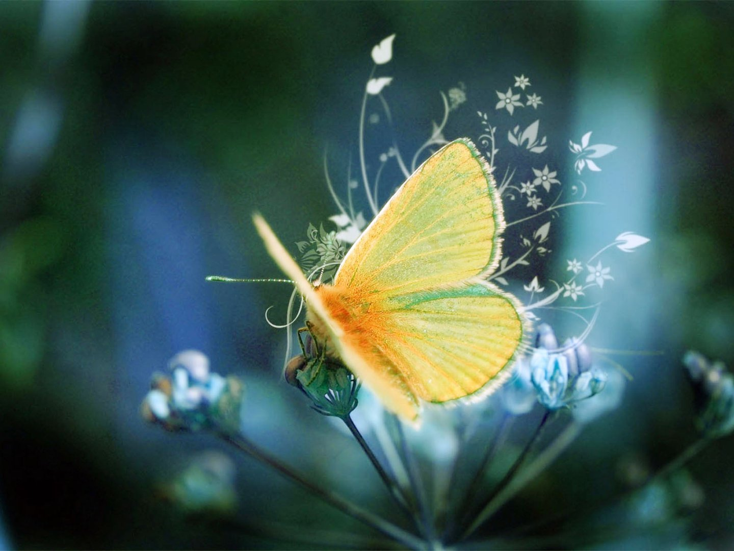Butterfly HD Laptop Wallpapers here you can see Butterfly HD Laptop 1440x1080