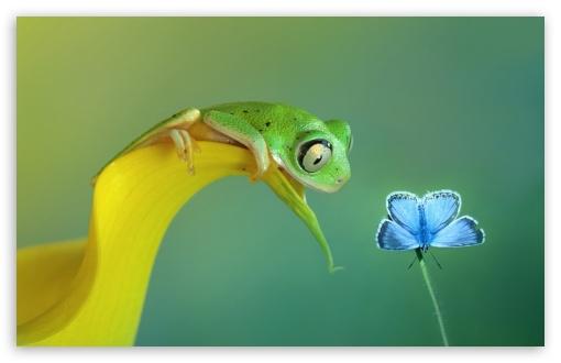 Cute Frog wallpaper 510x330