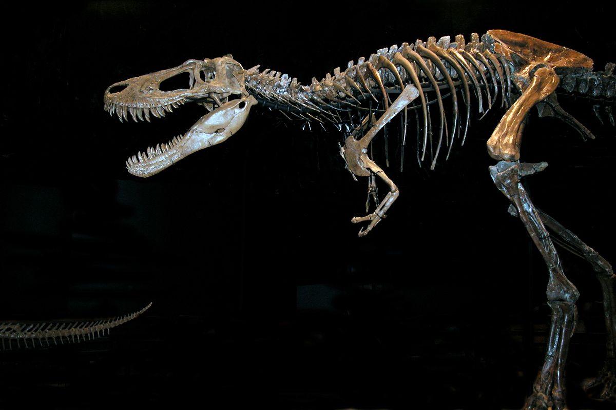 Pin Tyrannosaurus Wallpaper 1200x800