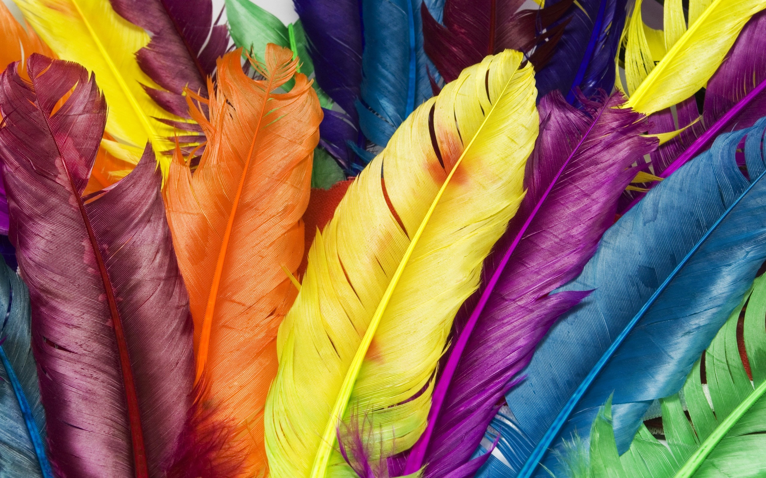 Feathers in Colors Wallpapers HD Wallpapers 2560x1600
