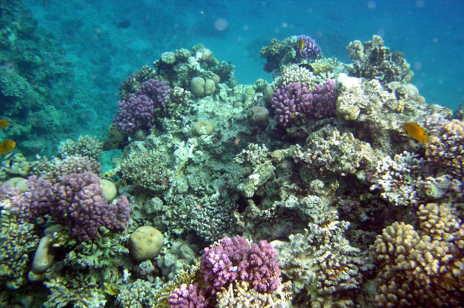 Coral Reef wallpapers christianhdwallpaper 1600x1063