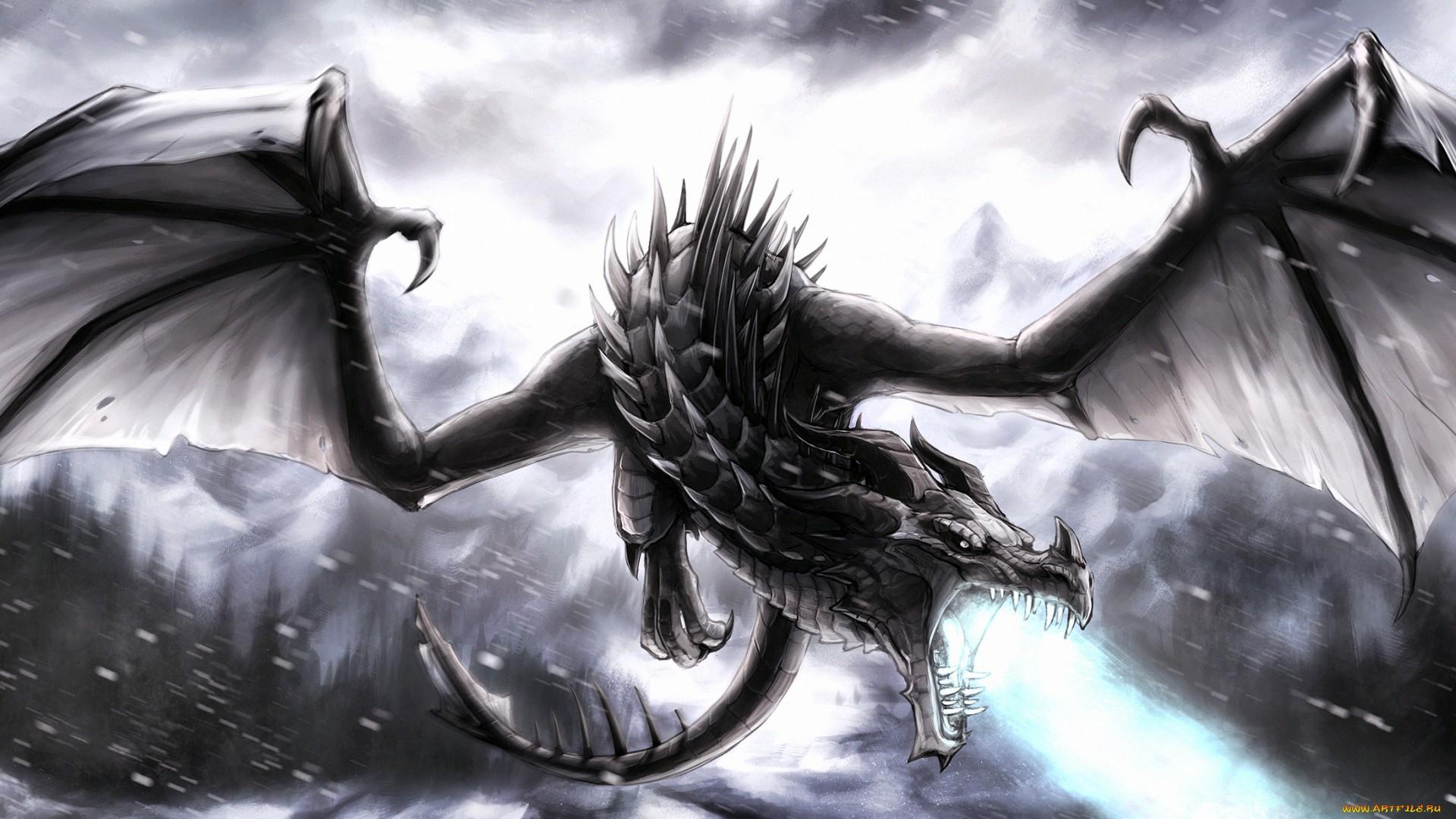 Black Dragon Wallpapers  WallpaperSafari
