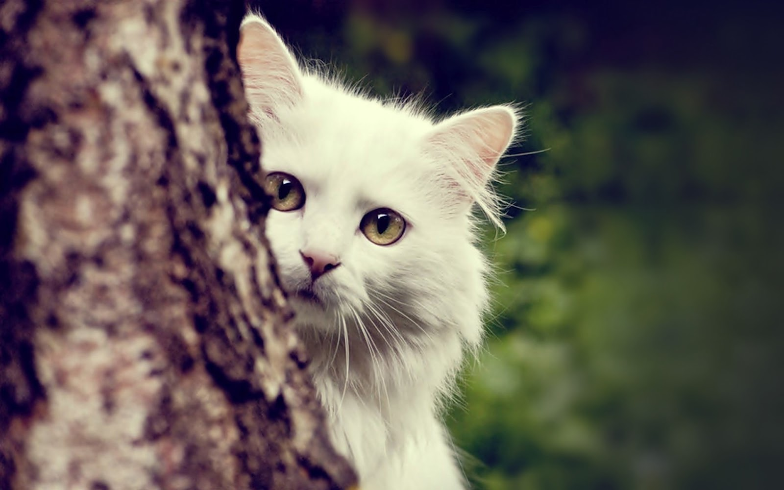 Proxecto Gato cats wallpapers by bighdwallpapers 1600x1000