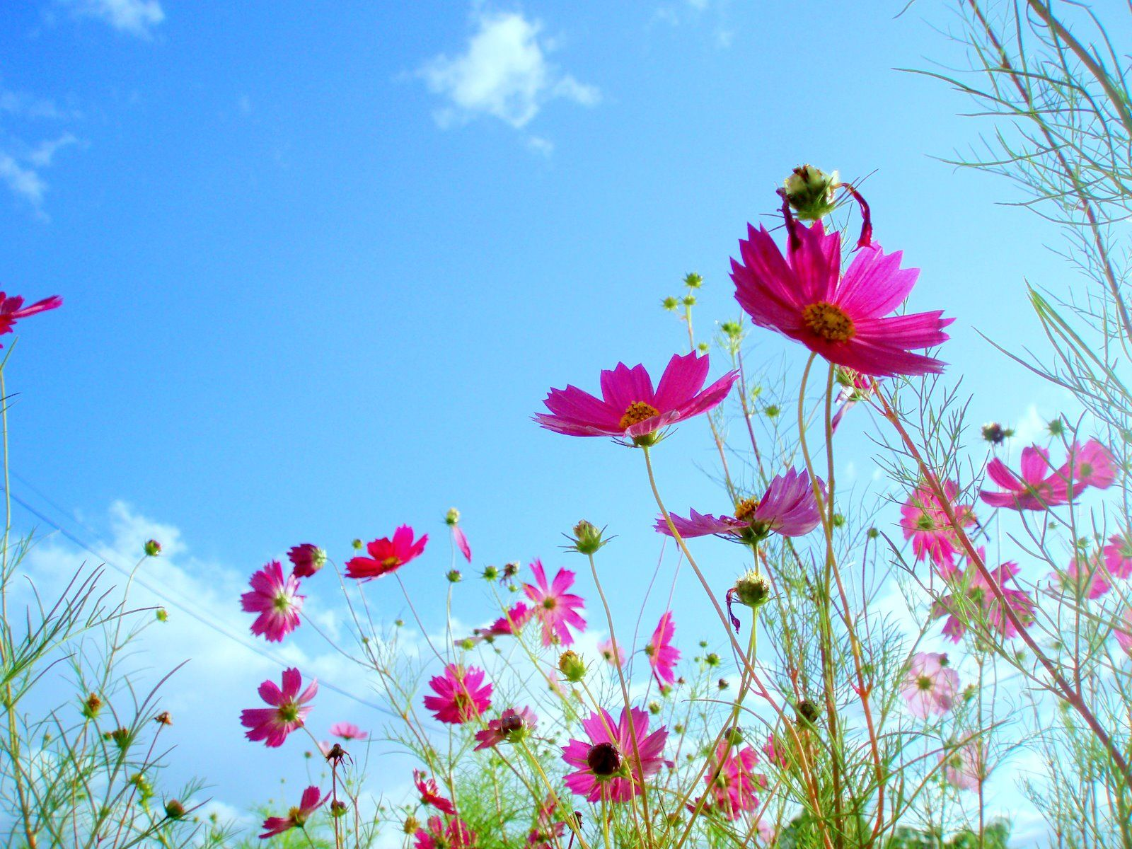 amazing flowers background 1600x1200 - photo #35
