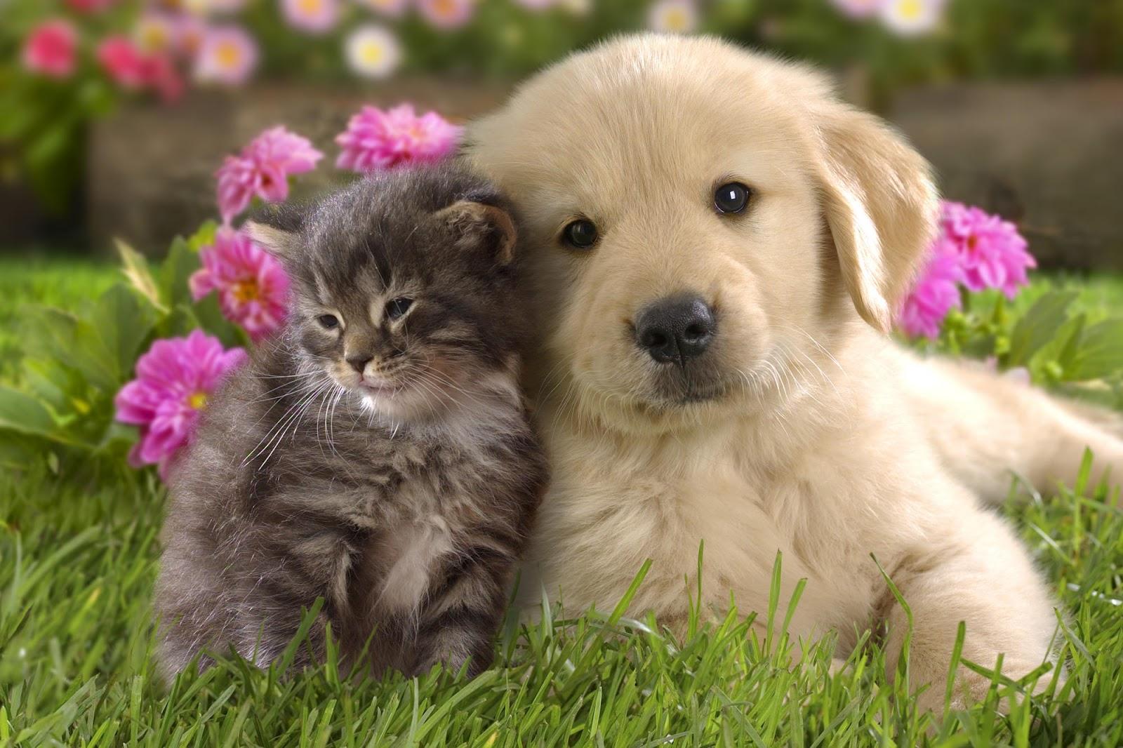 Cuteness Overload Kitten And Puppy Wallpaper Money Stuffs 1600x1066