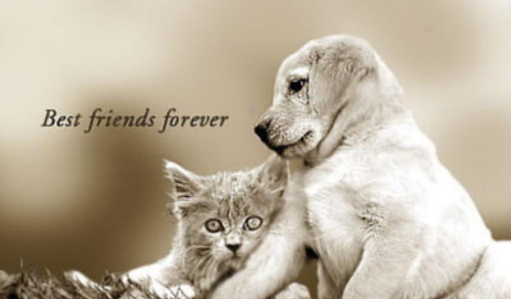 Best Friends Forever Wallpaper  yvt2 wallpapers55com   Best 1024x600