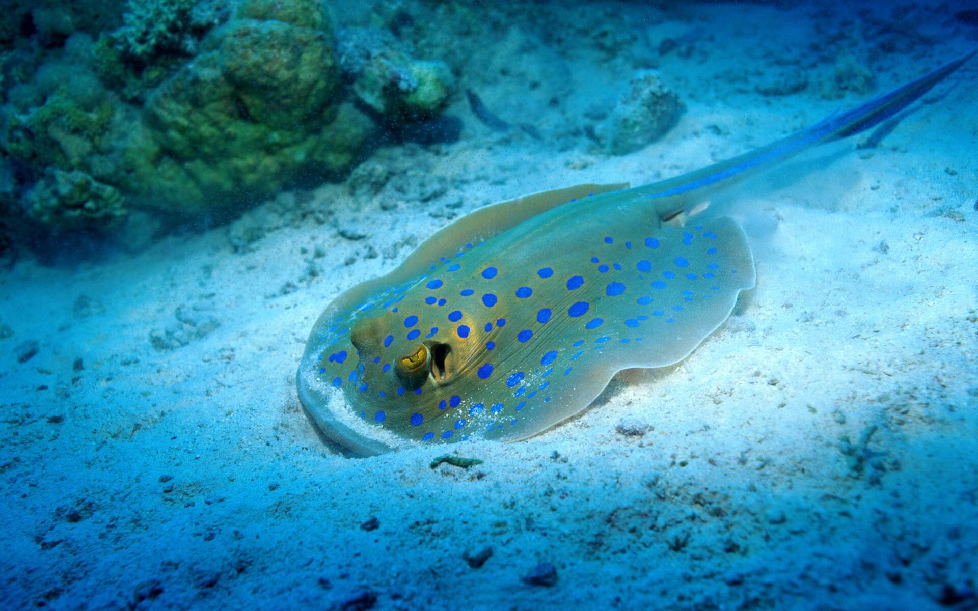 Ocean Life Marine Life Pics Daily Pics Update HD Wallpapers 1920x1200