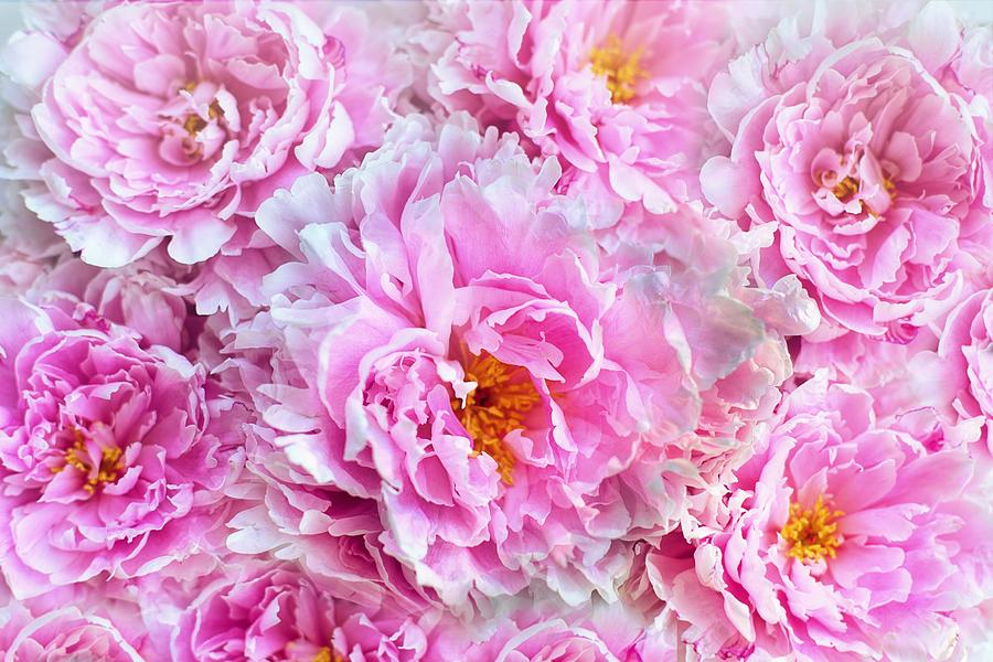 Pink flowers everywhere Photograph by Top Wallpapers 900x600
