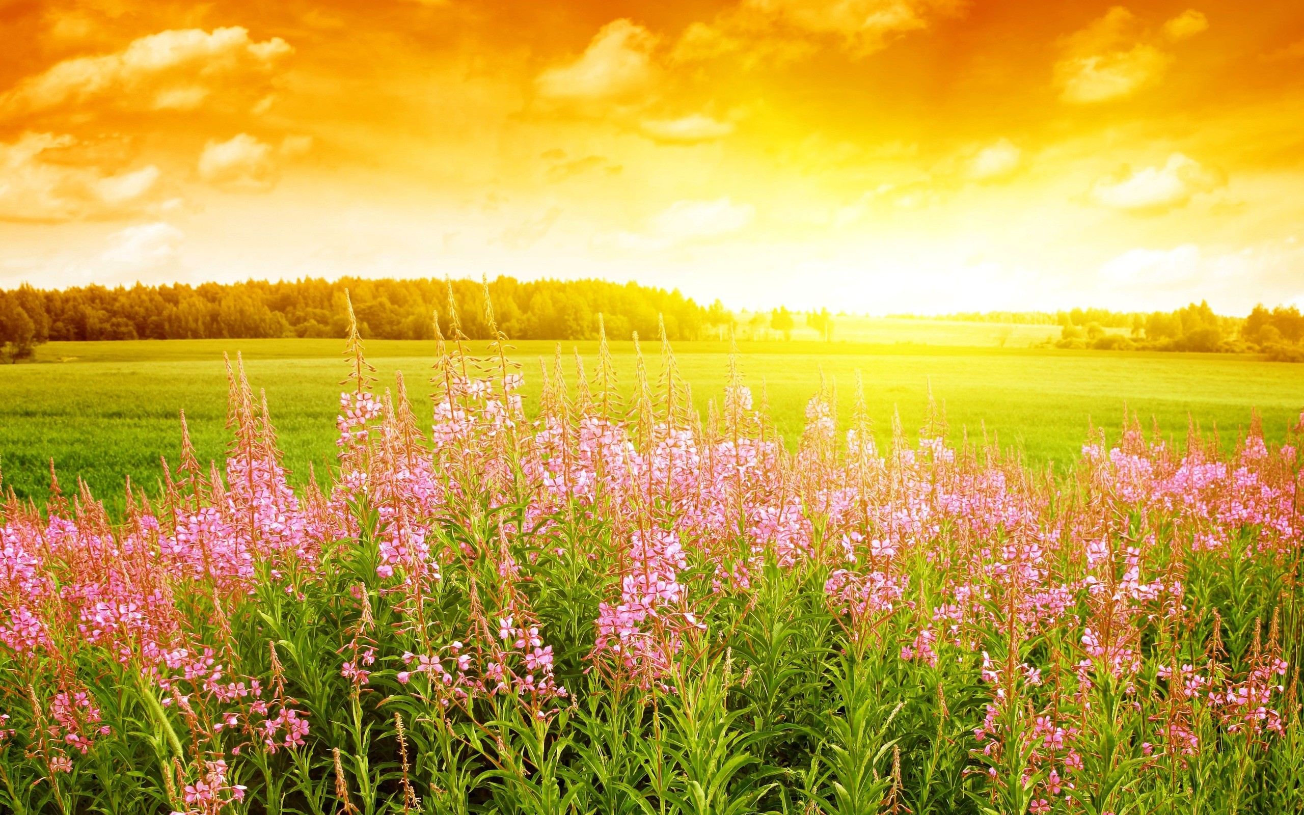 download bright spring sunrise awakens the flowers of spring 2560x1600