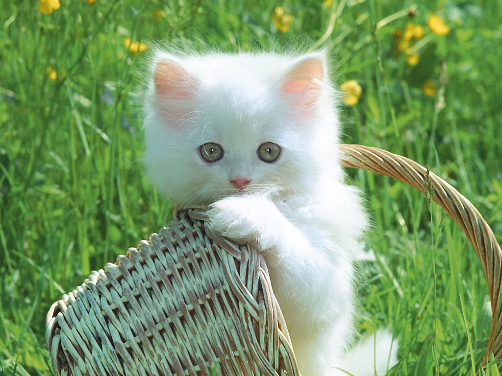 All World Wallpapers Cats And Kittens Cute Animals Funny 1024x768