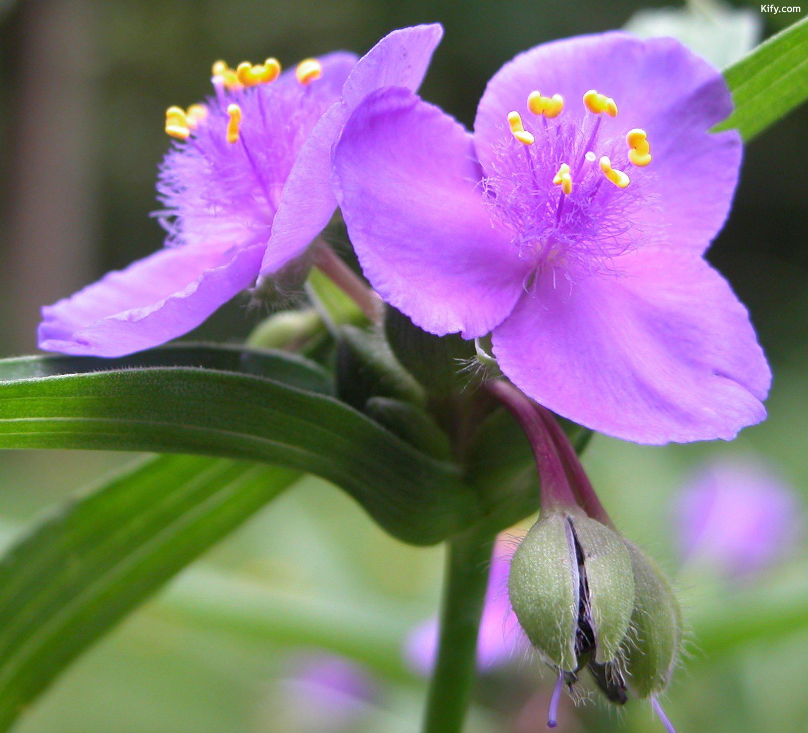 Purple Nature Wallpapers and Screensavers - WallpaperSafari
