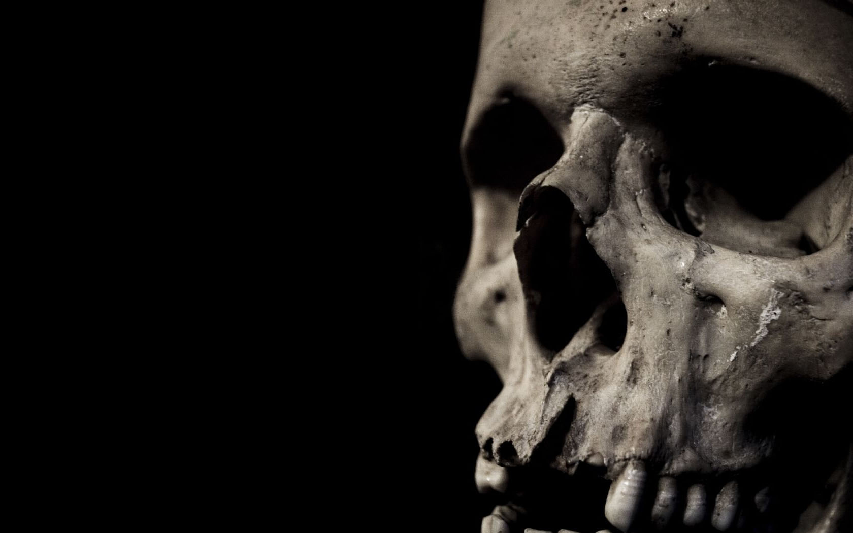 Download Artistic Skulls wallpaper skull close up 1680x1050