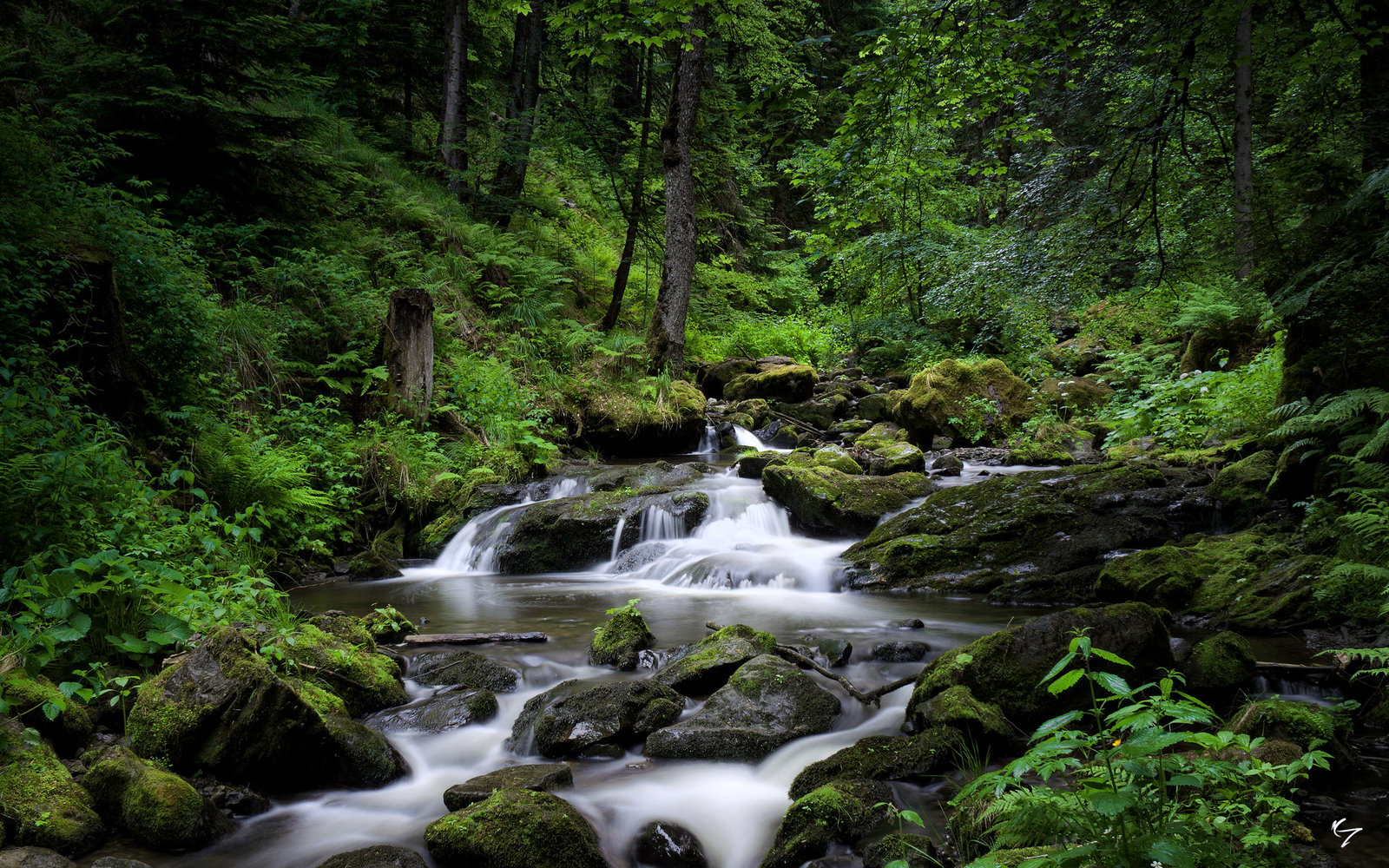 Black Forest River III by NYClaudioTesta 1600x1000