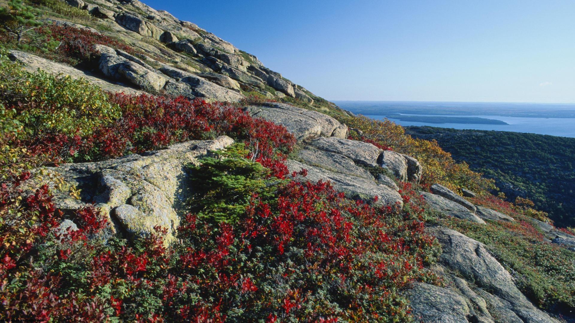 Blueberry Foliage Acadia National Park Maine   1920x1080   868700 1920x1080