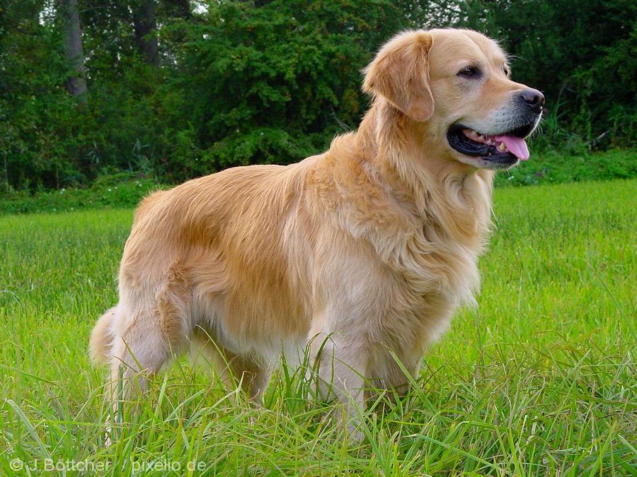Dogs Desktop Backgrounds Download 3 900x675