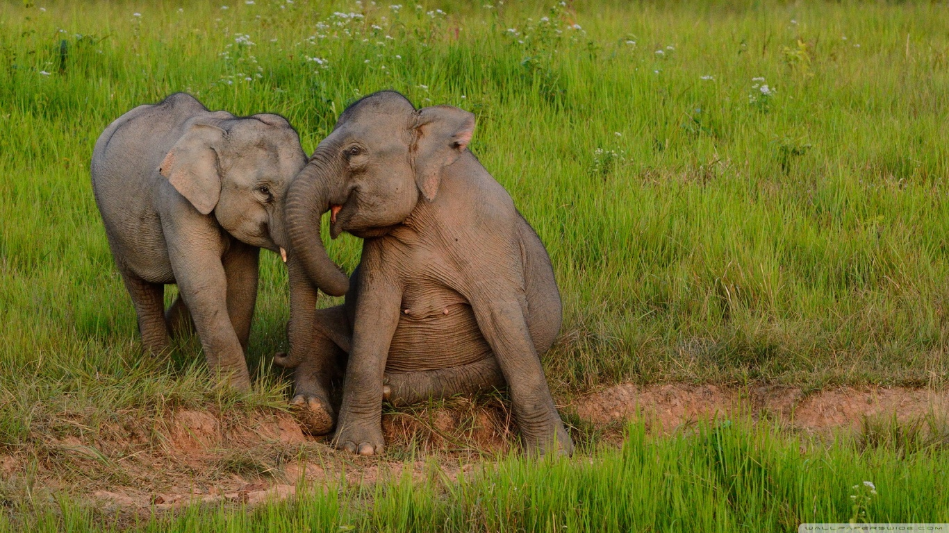 Cute baby elephants wallpaper