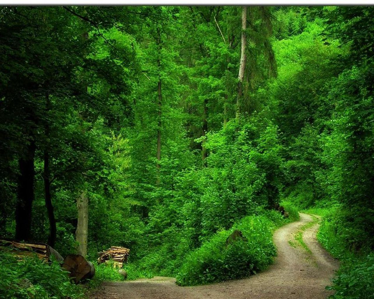 Green images Green Forest Wallpaper HD wallpaper and background photos 1280x1024