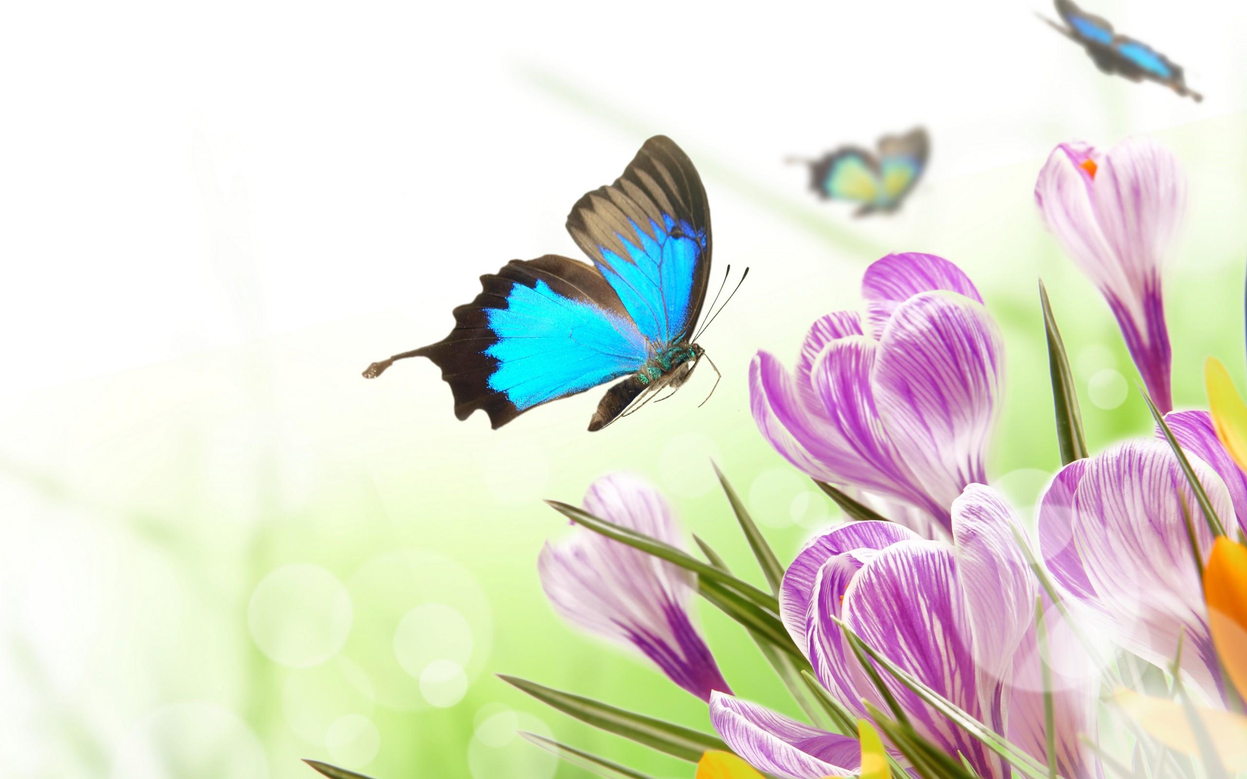butter spring blue wallpaper - photo #7