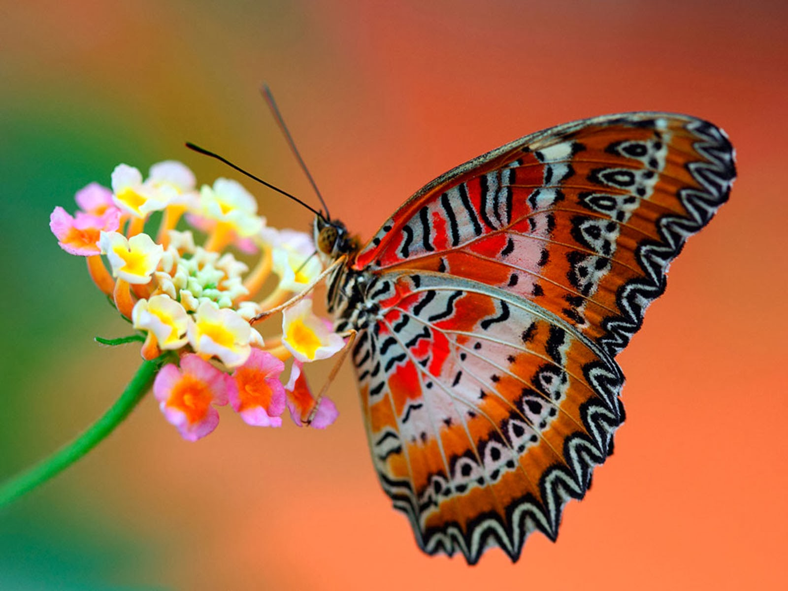 wallpapers Butterfly Desktop Wallpapers 1600x1200