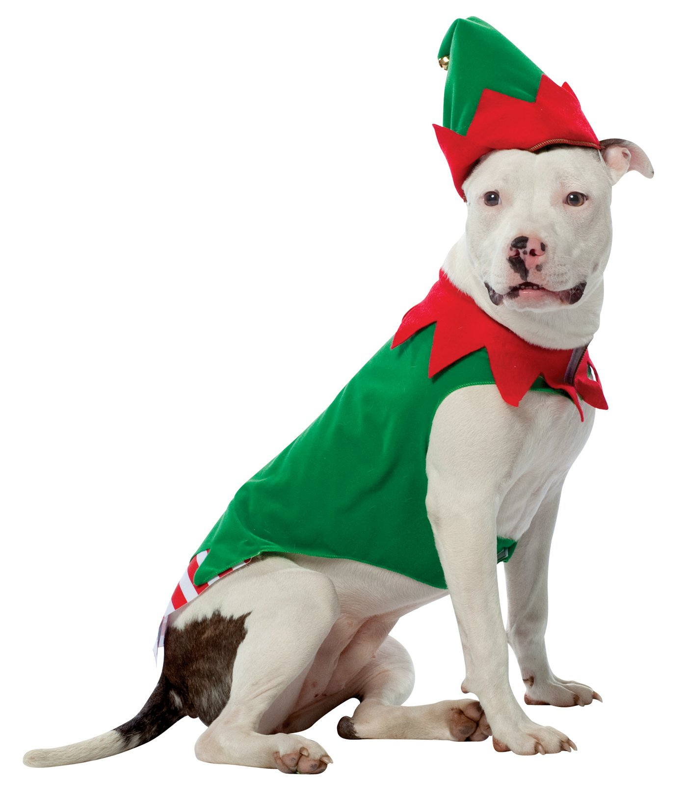 Christmas Pitbull Wallpaper