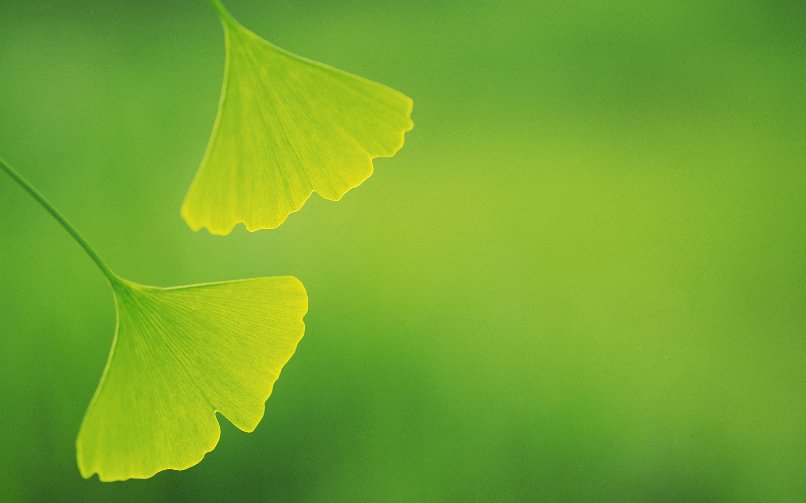 the wallpaper includes two green leaves and background both good