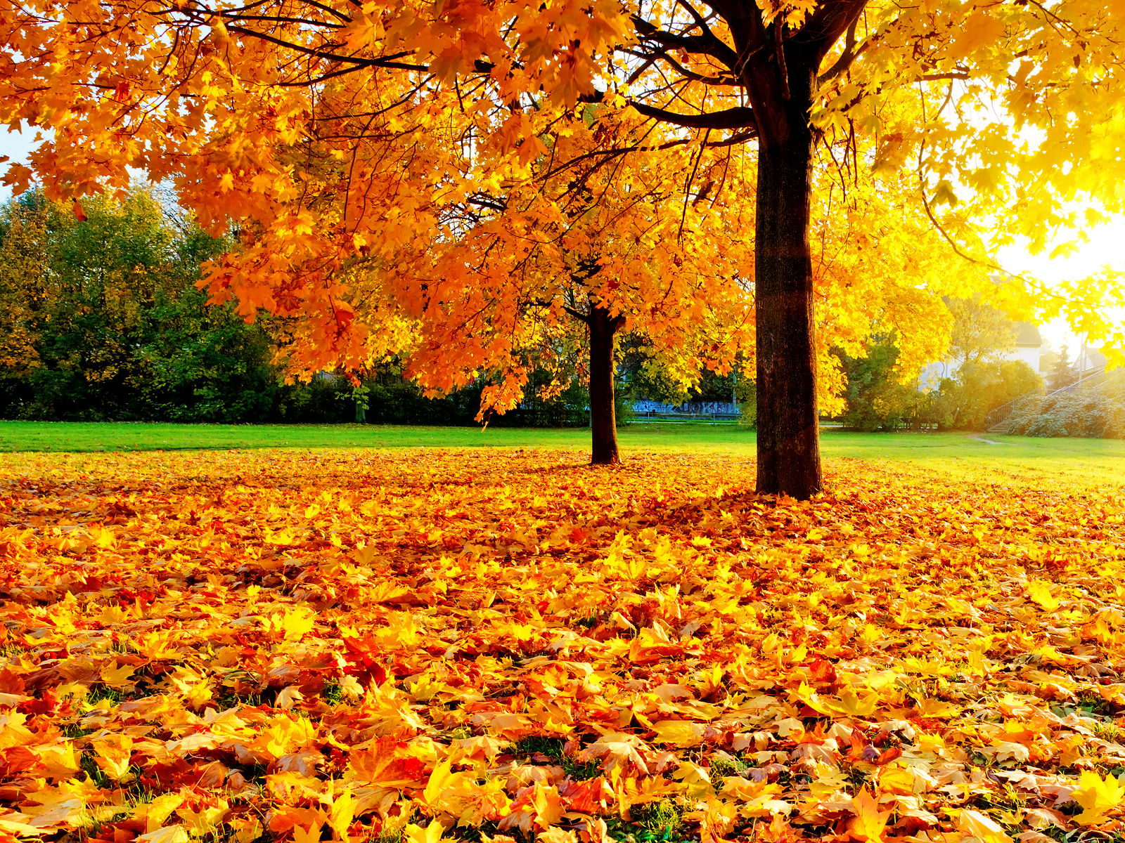 Autumn in Central Park- There's Just Nothing Better ...  |Autumn Central Park Screensavers