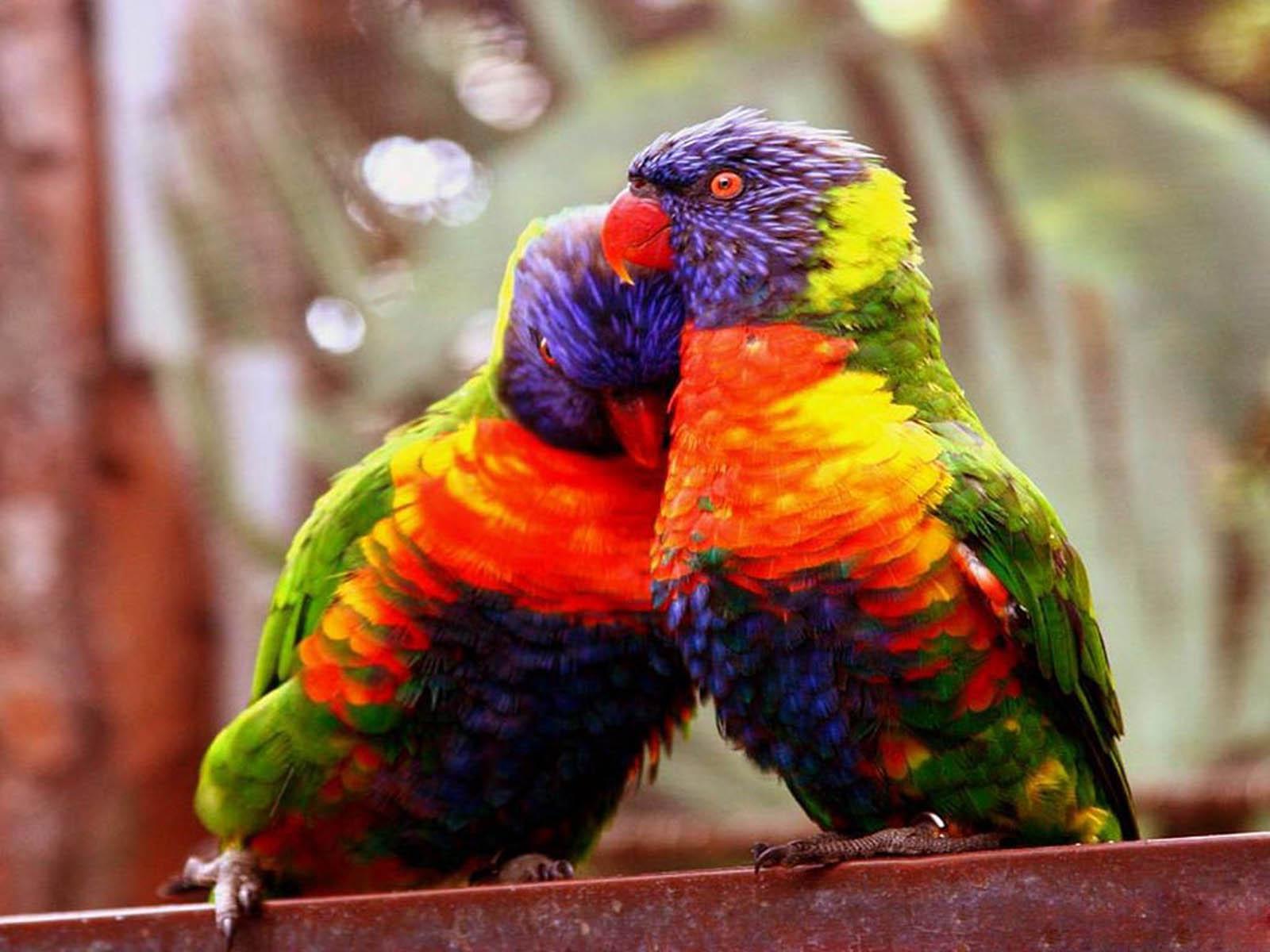 73 Wallpapers Of Love Birds On Wallpapersafari