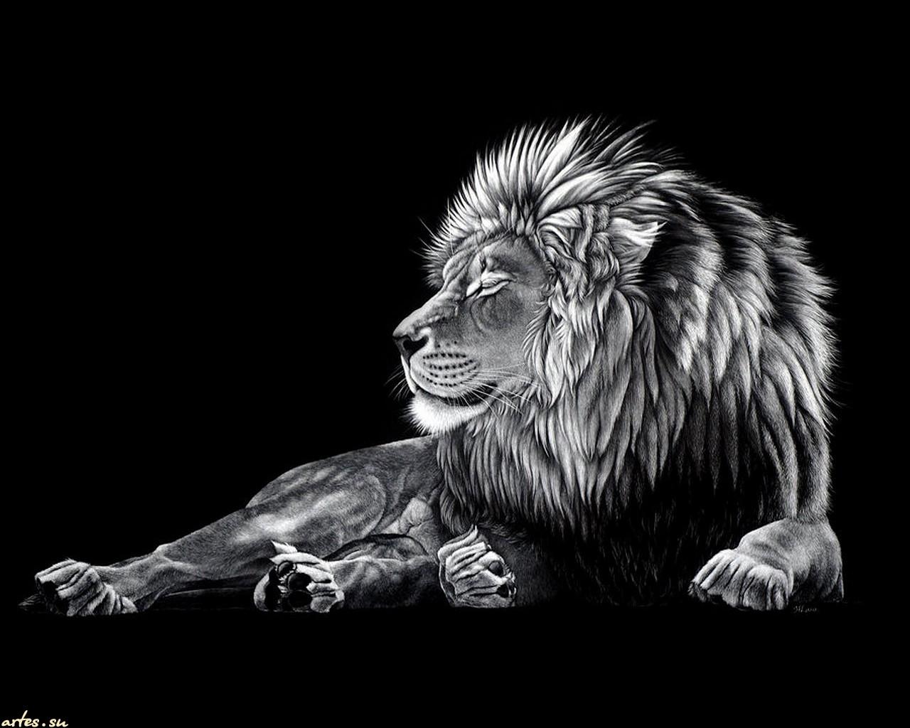 Lion Black Theme Wallpaper
