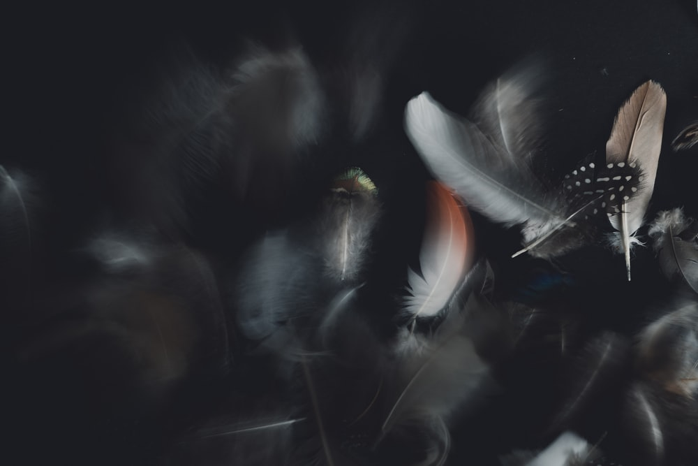 white and black feather on black background photo Grey 1000x667