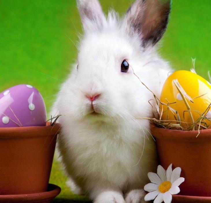 Easter Bunny Wallpaper Desktop High Definition 730x700