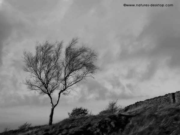 Black and white landscape wallpaper of a tree on a hillside 600x450
