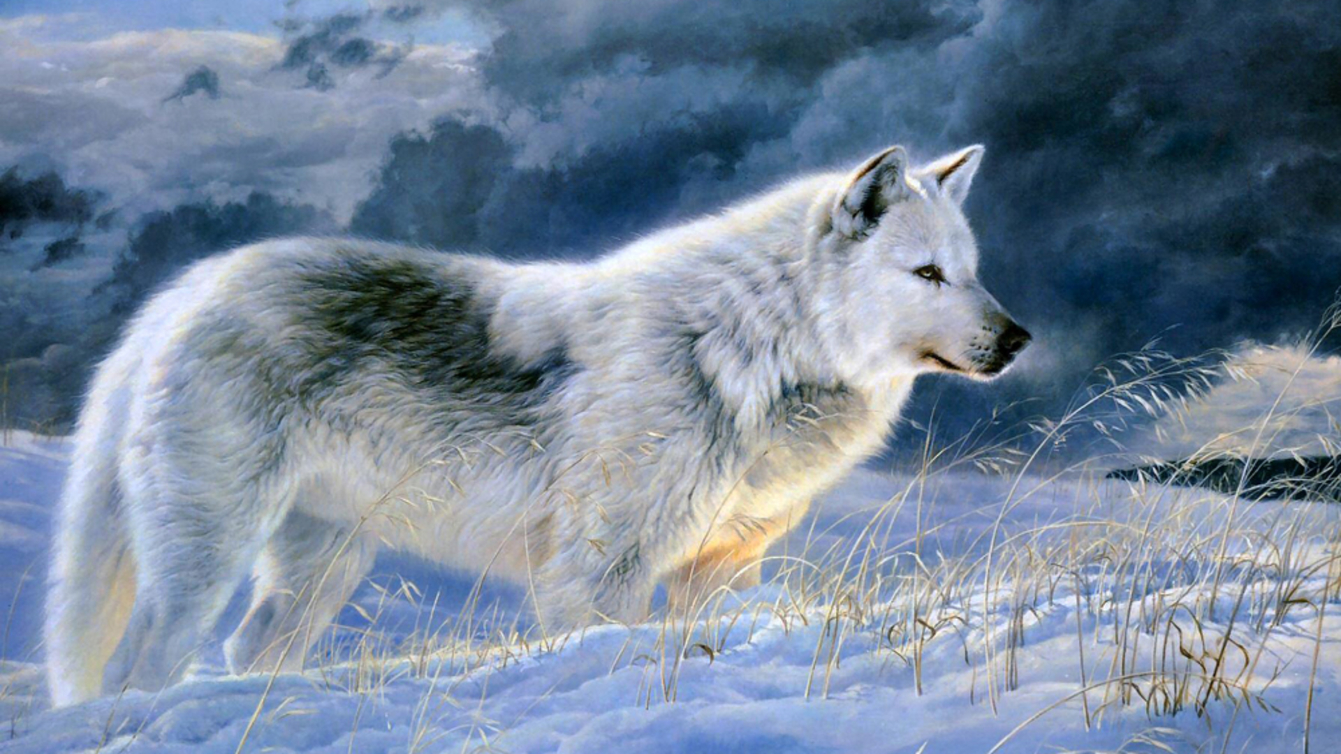 Beautiful Gray Wolf Animal Hd Wallpapers Download Wolf Image 1920x1080
